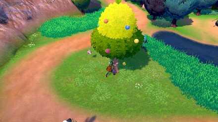 Shaking Berry Tree.jpg