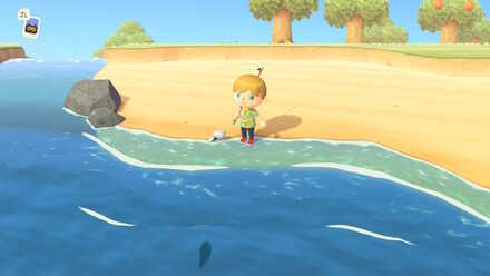 Find a Fish.jpg