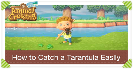 How to Catch a Tarantula Easily - Large.png