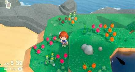 Rare Flower Island.jpeg