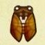 Cicadas.jpeg