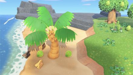Palm Tree Wood