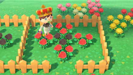 How To Grow Golden Roses Acnh Animal Crossing New Horizons