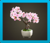 Cherry-Blossom Bonsai Image