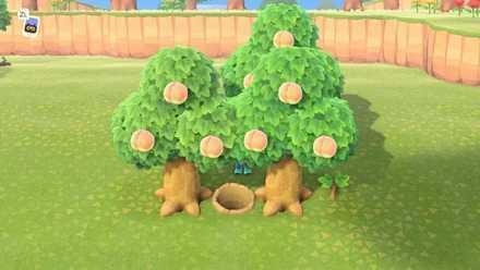 Unable to Grow Trees.jpeg