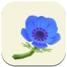 Blue Windflower Icon