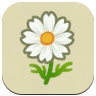 White Cosmos Icon