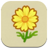 Yellow Cosmos Icon