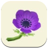 Purple Windflower Icon