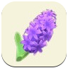 Purple Hyacinth Icon