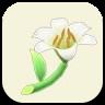 White Lily Icon