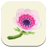 Pink Windflower Icon