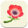 Red Windflower Icon