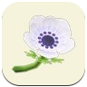 White Windflower Icon