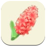 Red Hyacinth Icon