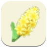 Yellow Hyacinth Icon