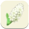 White Hyacinth Icon