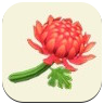 Red Mum Icon
