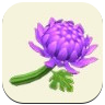 Purple Mum Icon