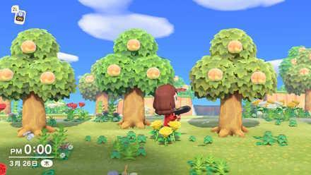 Fruit Tree Island