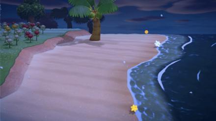 Star Fragments on the Beach