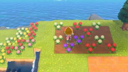 Watering hybrid flowers.jpg