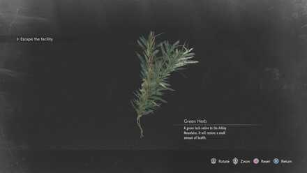 Green Herb.jpg
