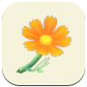 Orange Cosmos Icon