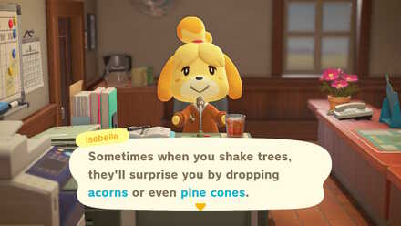 Acorns and pine cones announcement.jpg