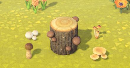 Mushroom Series header.png