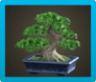 Pine Bonsai Tree Icon