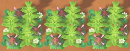 Weeds in Spring Stage 3.jpg