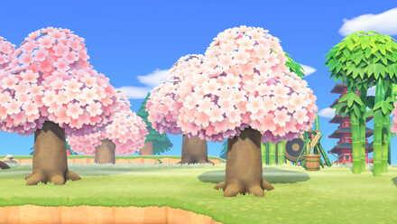 Cherry-Blossom Festival.jpg