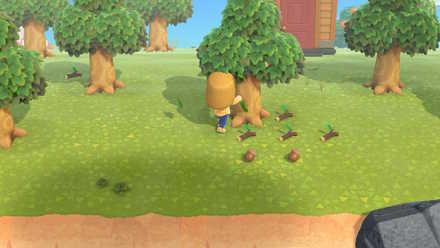 Shake hardwood tree to get acorn.jpg