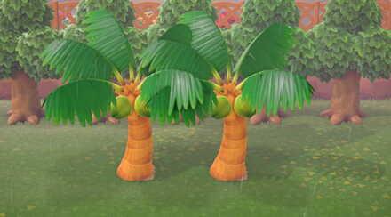 Palm Trees on Sand Path.jpg