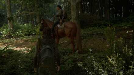 Horse Riding - Banner 1.jpg