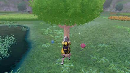Shake Trees.jpg