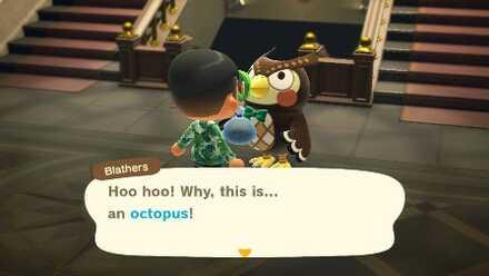 Hoo Hoo Octopus!.jpg
