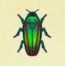 Jewel Beetle icon.jpg