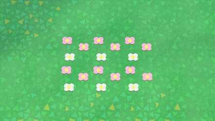 cross-shaped flowers.jpg