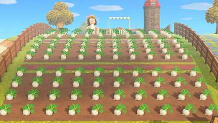 turnip farm.jpg