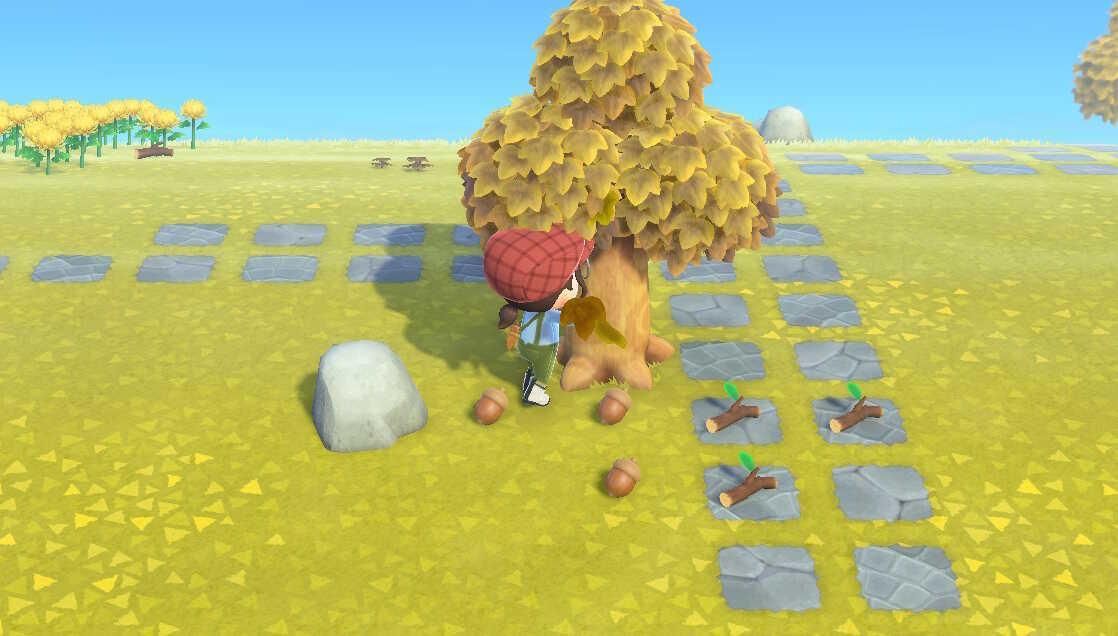 Animal Crossing New Horizons (ACNH) Getting Acorns.jpg