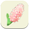 ACNH Pink Hyacinth Icon