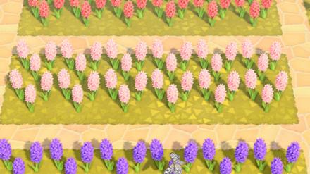 Animal Crossing New Horizons (ACNH) Hyacinths
