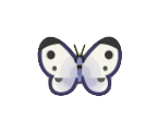 Common Butterfly Image