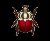 Goliath Beetle Image