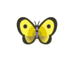 Yellow Butterfly Image