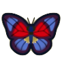 Agrias Butterfly Image