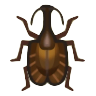 Violin Beetle Image