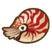 Chambered Nautilus Image